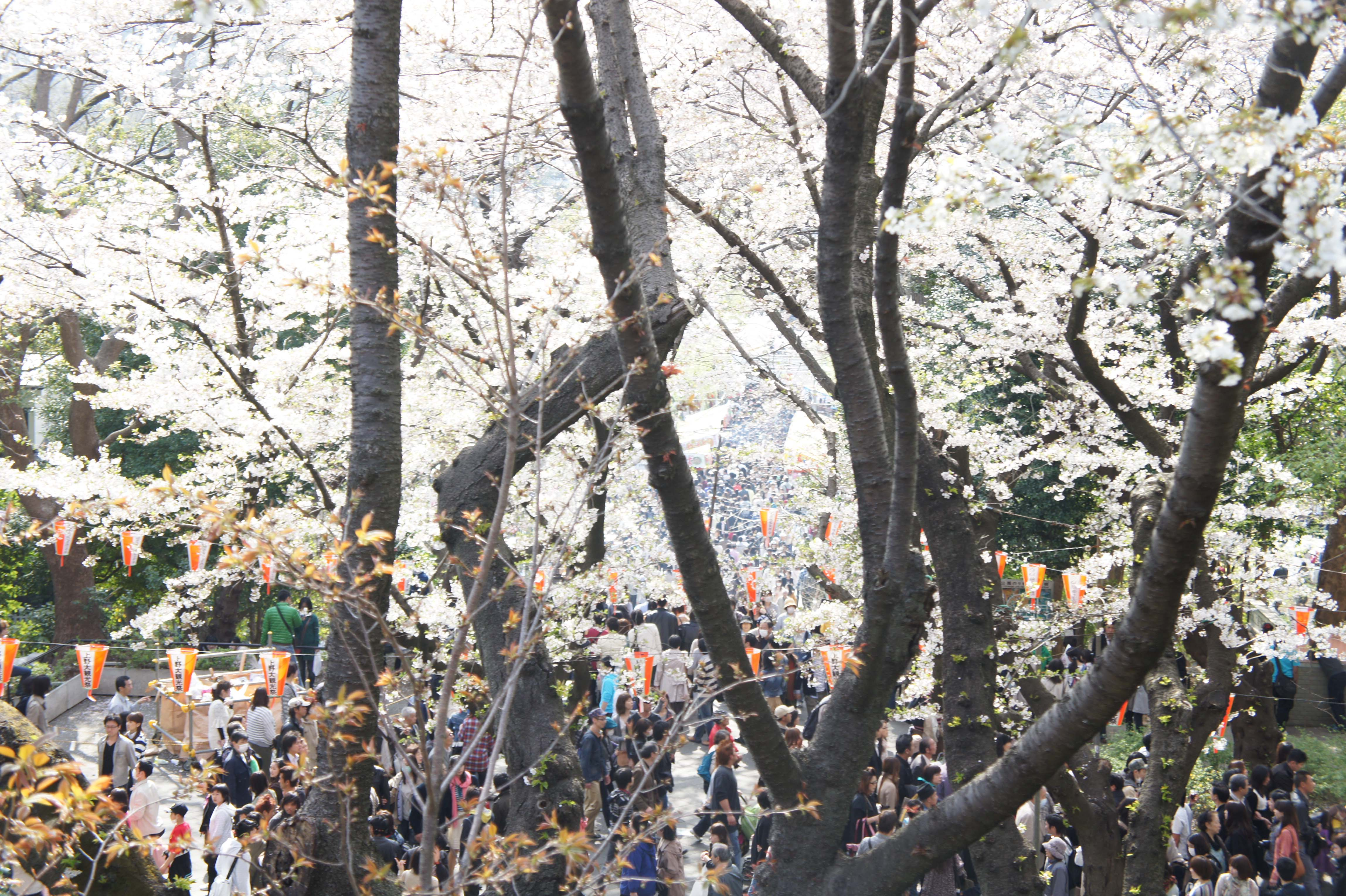 Ueno Park completely packed. You can see that even the tiniest dots in the center of the photo are people's heads