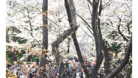 TOKIOcover